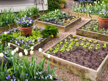 Why Gardens Should Have Raised Beds