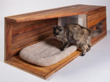 Home Improvement Ideas Catering For Your Cat