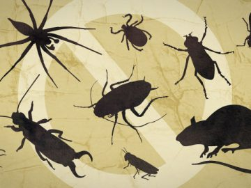 Tips for Keeping Pests Out of Your House