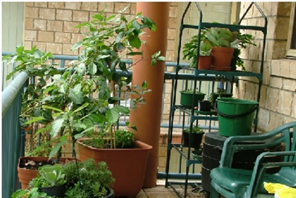 Tips For Having An Outdoor Garden In Your Apartment