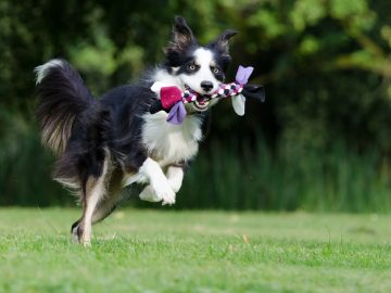 Making Your Garden More Pet Friendly