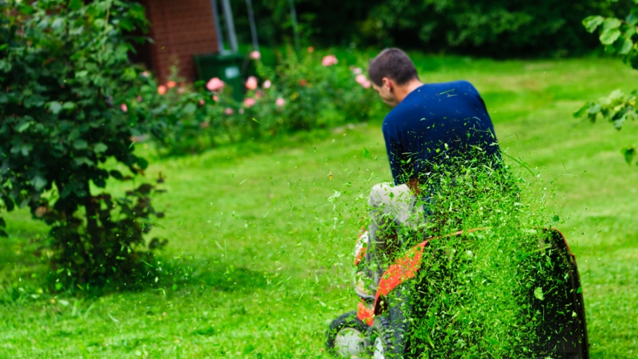 Buying Your First Lawn Mower? Here Are the Things You Should Watch For